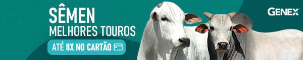 As melhores ofertas de sêmen bovino é na Genex + erural  - Pequena
