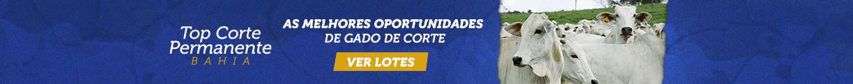 Top Corte Permanente Bahia - As melhores oportunidades de gado de corte - Grande